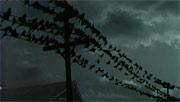 Птицы (1963)