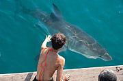 Заклинательница акул