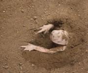 Зарывающие / Закопанные