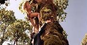 Шина — королева джунглей